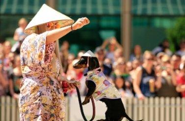 Sôi nổi ngày Hội đua chó lạp xưởng thường niên tại vùng Southgate